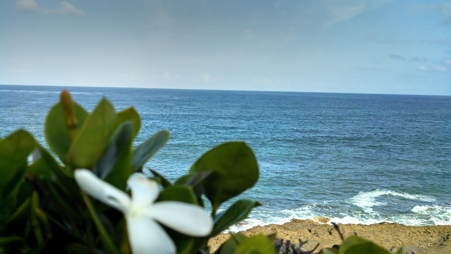 ocean and flower view